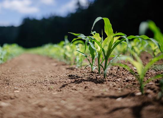 AL-KO Gartenwalze Vorteile | Bodenverfestigung- und ausdrücken